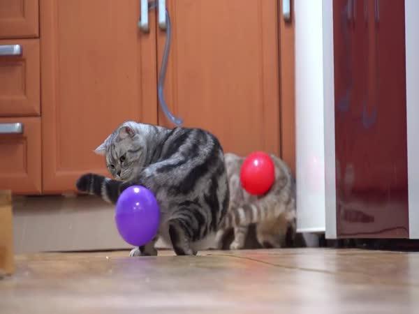Kočka a nafukovací balónek