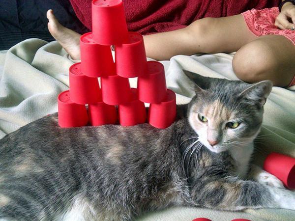 GALERIE – Odkládací kočka