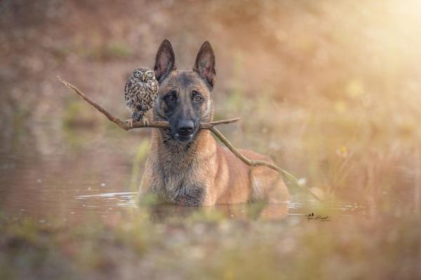 GALERIE – Pes a sova