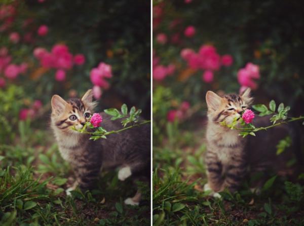 GALERIE –10 nejroztomilejších zvířat