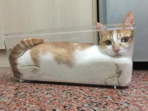 GALERIE – Kočky se vejdou všude