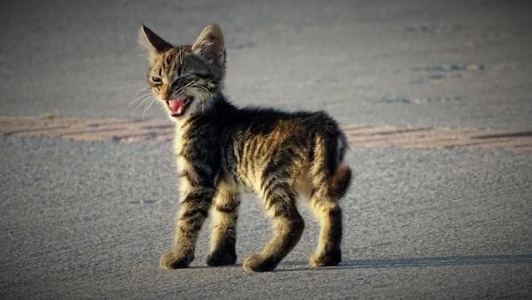 GALERIE – Nejnaštvanější kočičí výrazy