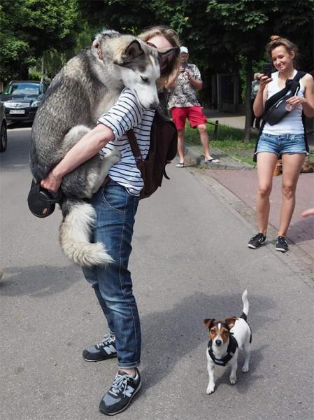 GALERIE – Největší psí strašpytlové