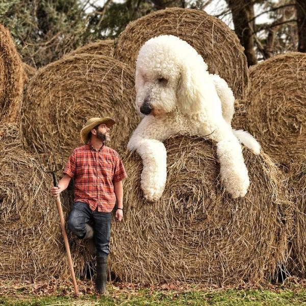 GALERIE - Gigantický pes s páníčkem #2