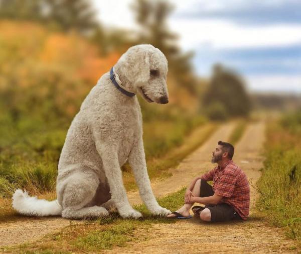 GALERIE - Gigantický pes s páníčkem #3
