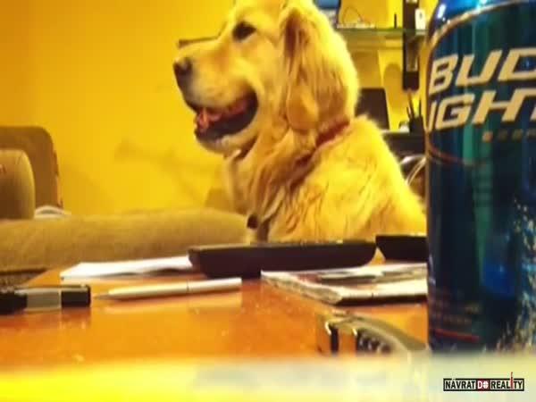 Vtipný jamující pes