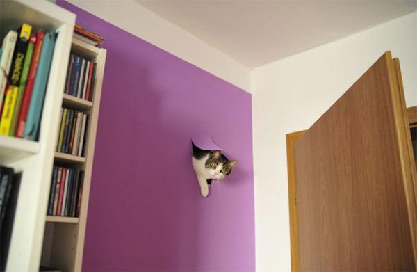 GALERIE - 20 koček, co doma mít nechcete #4