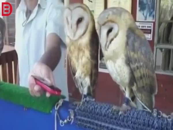 Ptačí vtipná kompilace