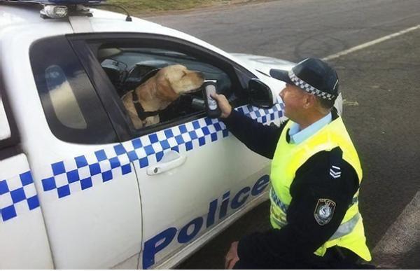 GALERIE – Policisté se smyslem pro humor