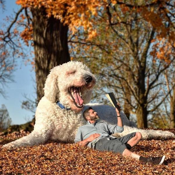 GALERIE – Přerostlý pes vyráží na dobroudružství
