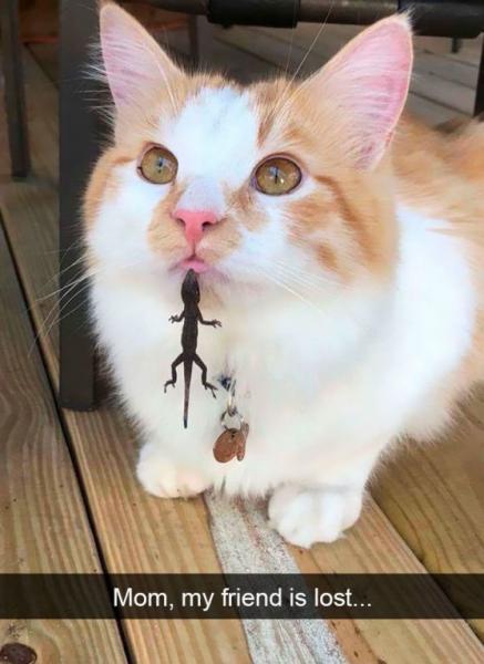 GALERIE – Kočky jsou prostě nejlepší!