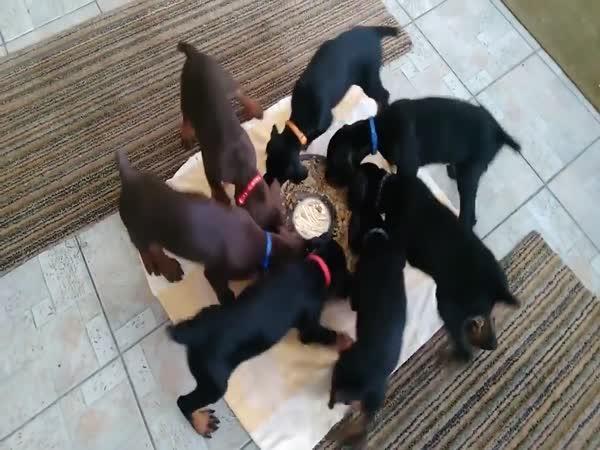 Kolotoč poháněný psími granulemi
