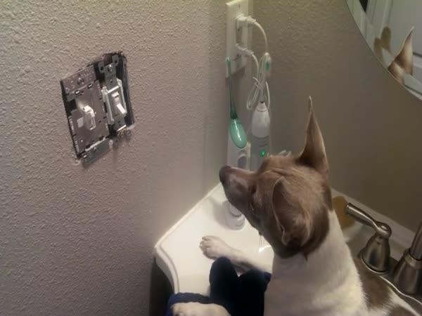 Pes čeká na myš