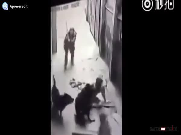 Útok pouličních psů v Číně