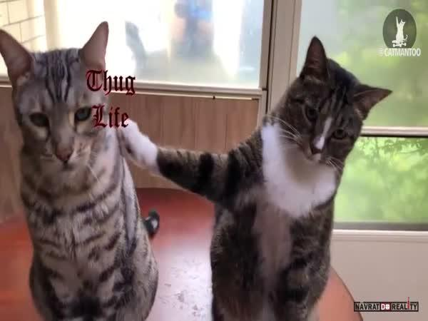 Vychytralá kočka