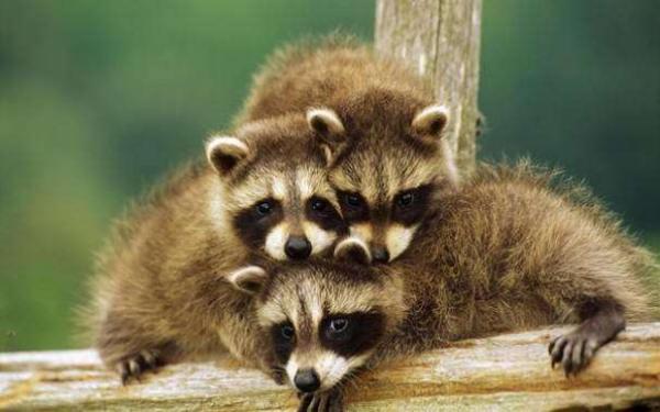GALERIE – 19 rozkošných zvířátek