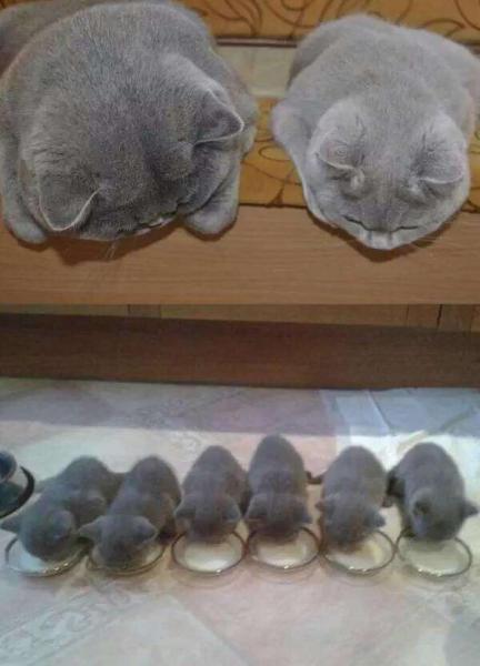 GALERIE – 18 pyšných kočičích maminek