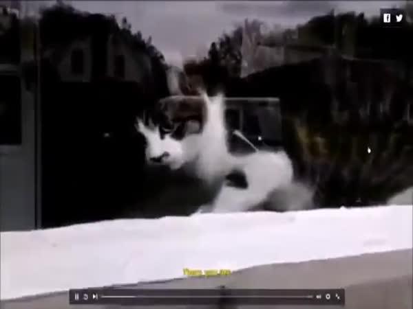 Pošťák bojuje s kočkou