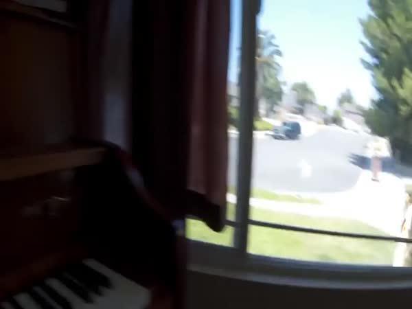 Co dělá kočka celý den sama doma?