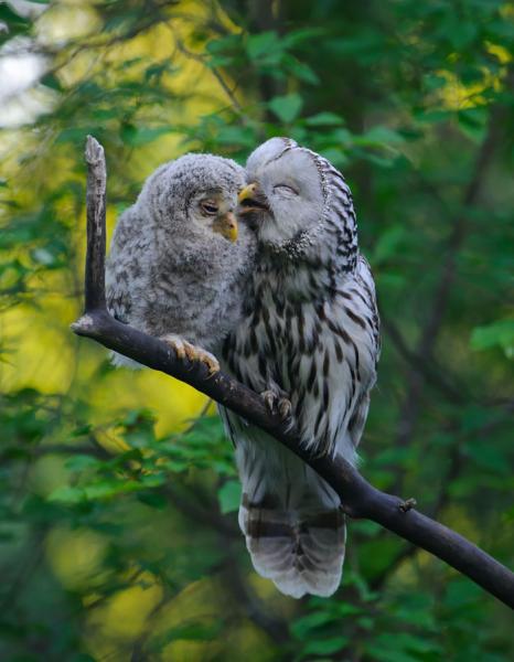 GALERIE - 12 ptačích obětavých rodičů