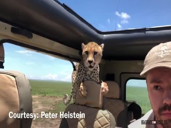 Setkání s gepardem