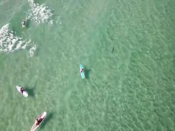 Dron nad Floridou natočil žraloka
