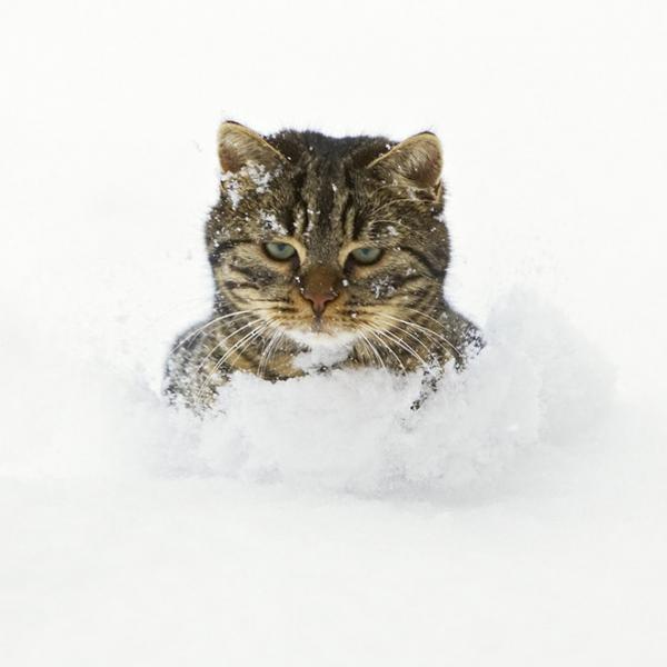 GALERIE - Kočičí reakce na sníh