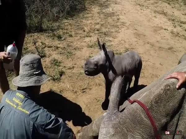 Malý obranář v Africe