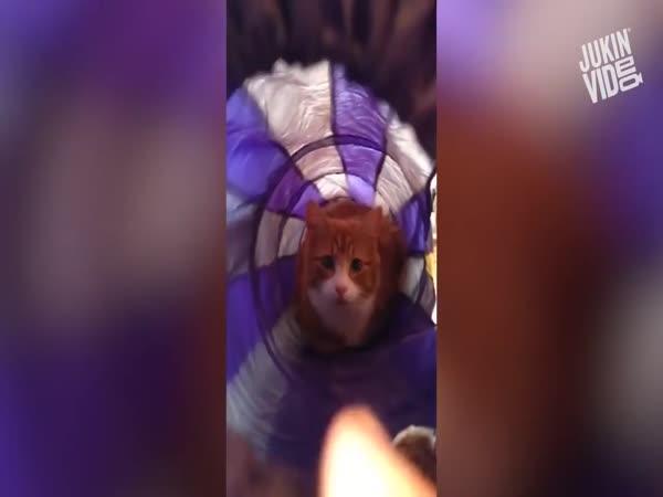 10 nejvydařenějších kočičích útoků