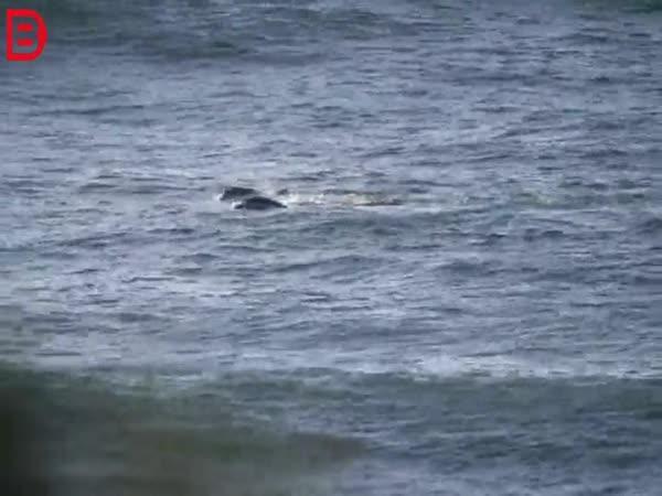 Surfař vs. delfín
