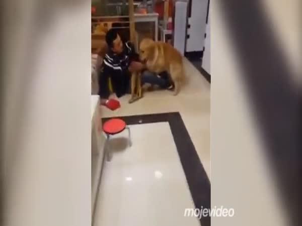 Dokonale vycvičený pes