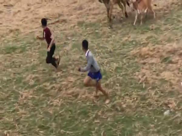 Krávy se už na to nemohly dívat!