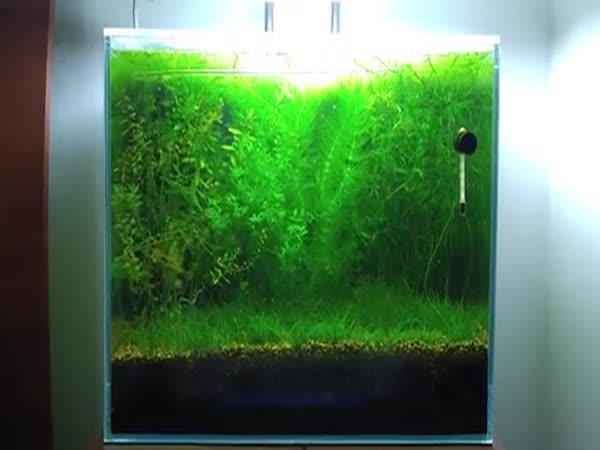 Autonomní akvárium bez filtrů
