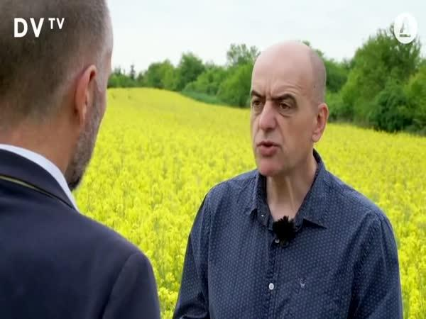 Následky pěstování řepky u nás