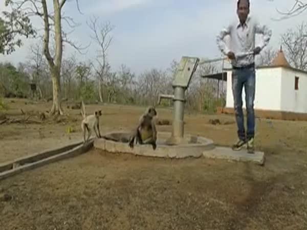 Když máš opici, potřebuješ vodu