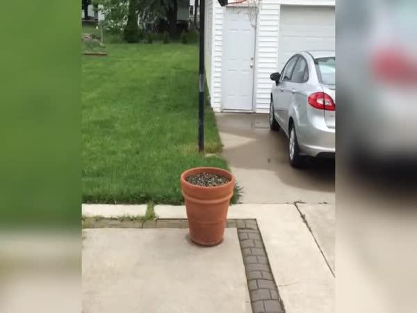 Pes zkouší majitele