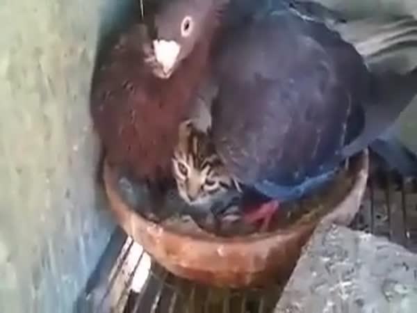 Co se mi z vejce vylíhlo?
