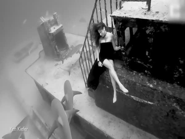Focení se žraloky (Bahamy)