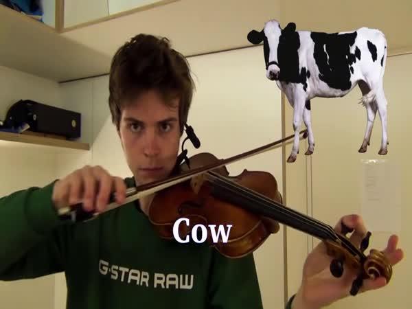 Imituje zvuky zvířat na houslích