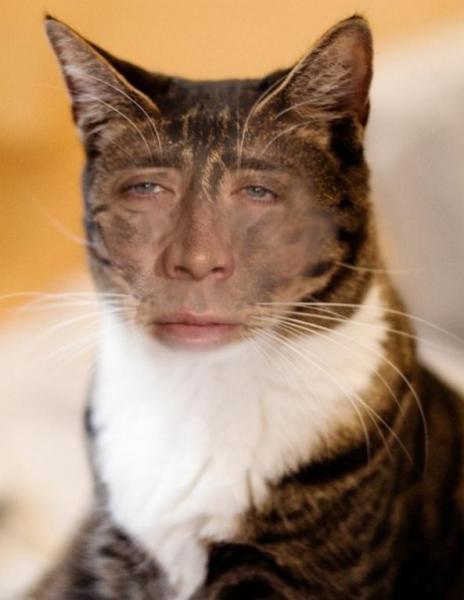 GALERIE – 15 děsivých koček