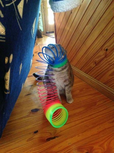 GALERIE - Kočky, které prostě musíte vidět #1