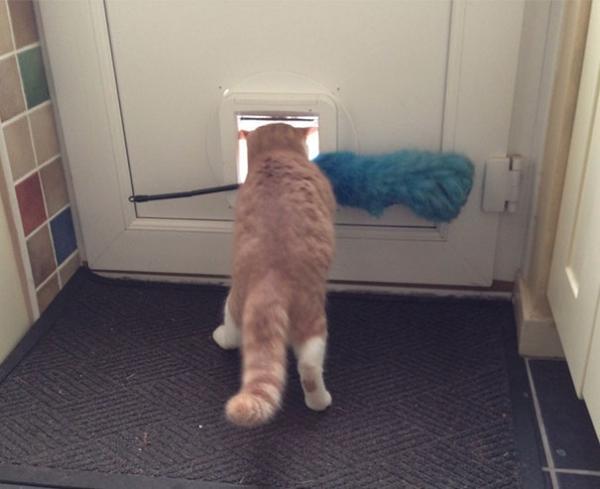 GALERIE - Kočky, které prostě musíte vidět #4