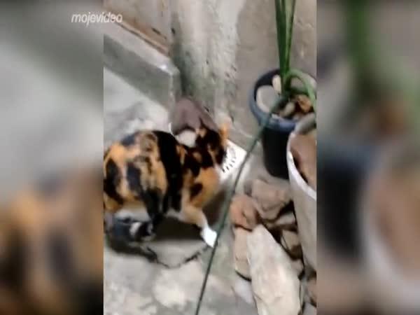 Kočka se učí chytat potkany