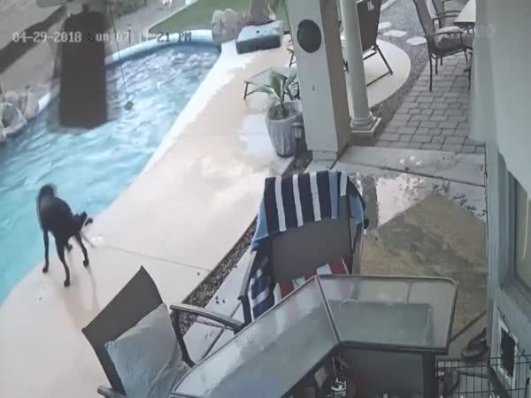 Sám se z bazénu nedostane (USA)