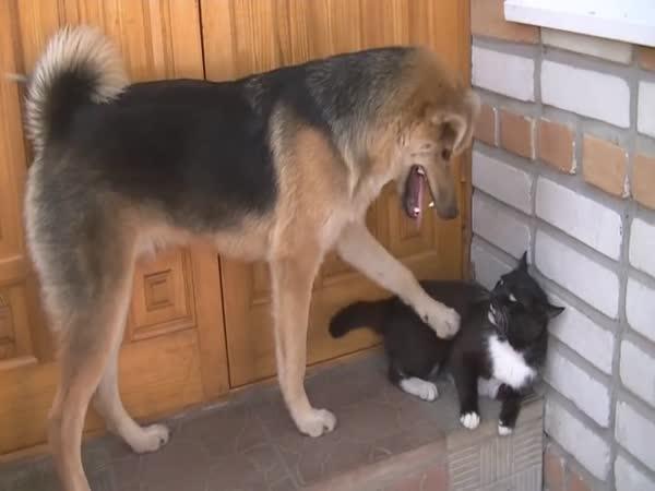 Věční nepřátelé kočka a pes