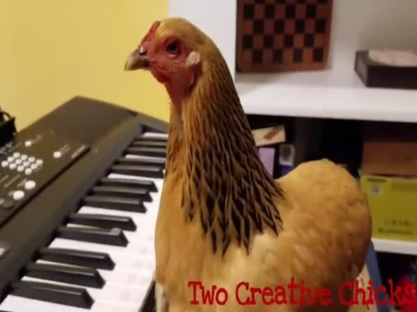 Slípka hraje na klavír
