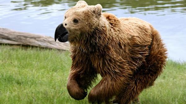GALERIE - Photoshopová evoluce zvířat