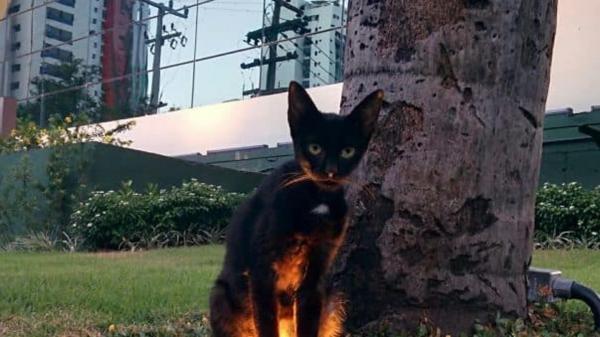 GALERIE - Kočky jsou stvoření Satana