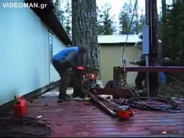 Kácení stromu profíkem