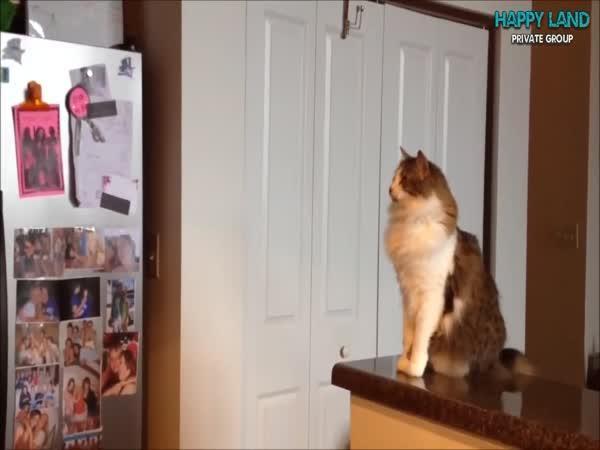 Když ti kočka dá high five